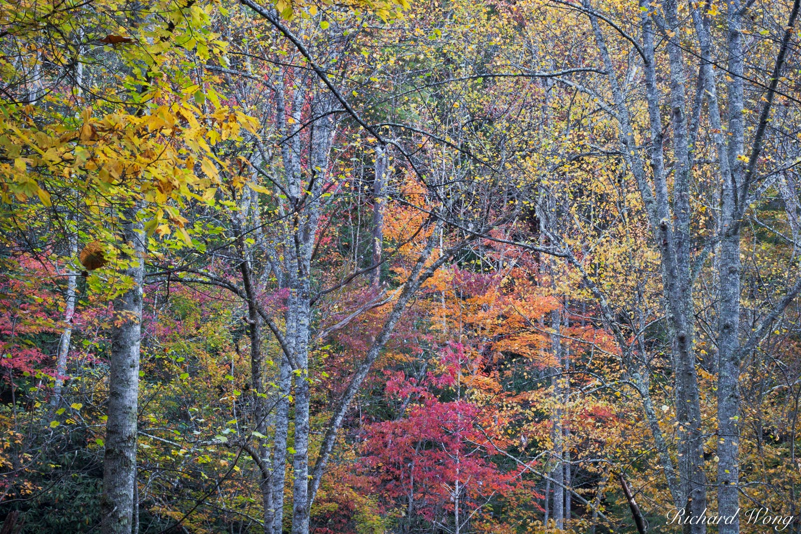 Fall Colors in the Red River Gorge Geological Area, Daniel Boone National Forest, Kentucky, photo, photo