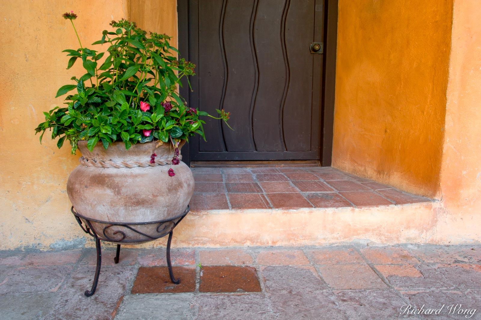 potted plant, mission san juan capistrano, california, photo, photo