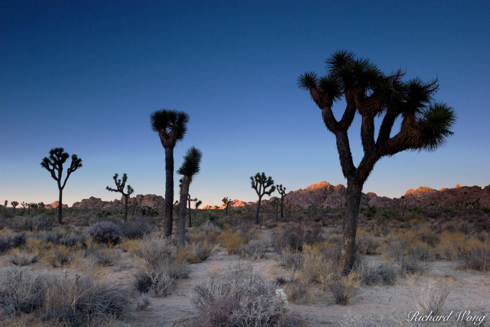 Joshua Trees and Last Light on Boulders, Joshua Tree National Park, California, photo, photo