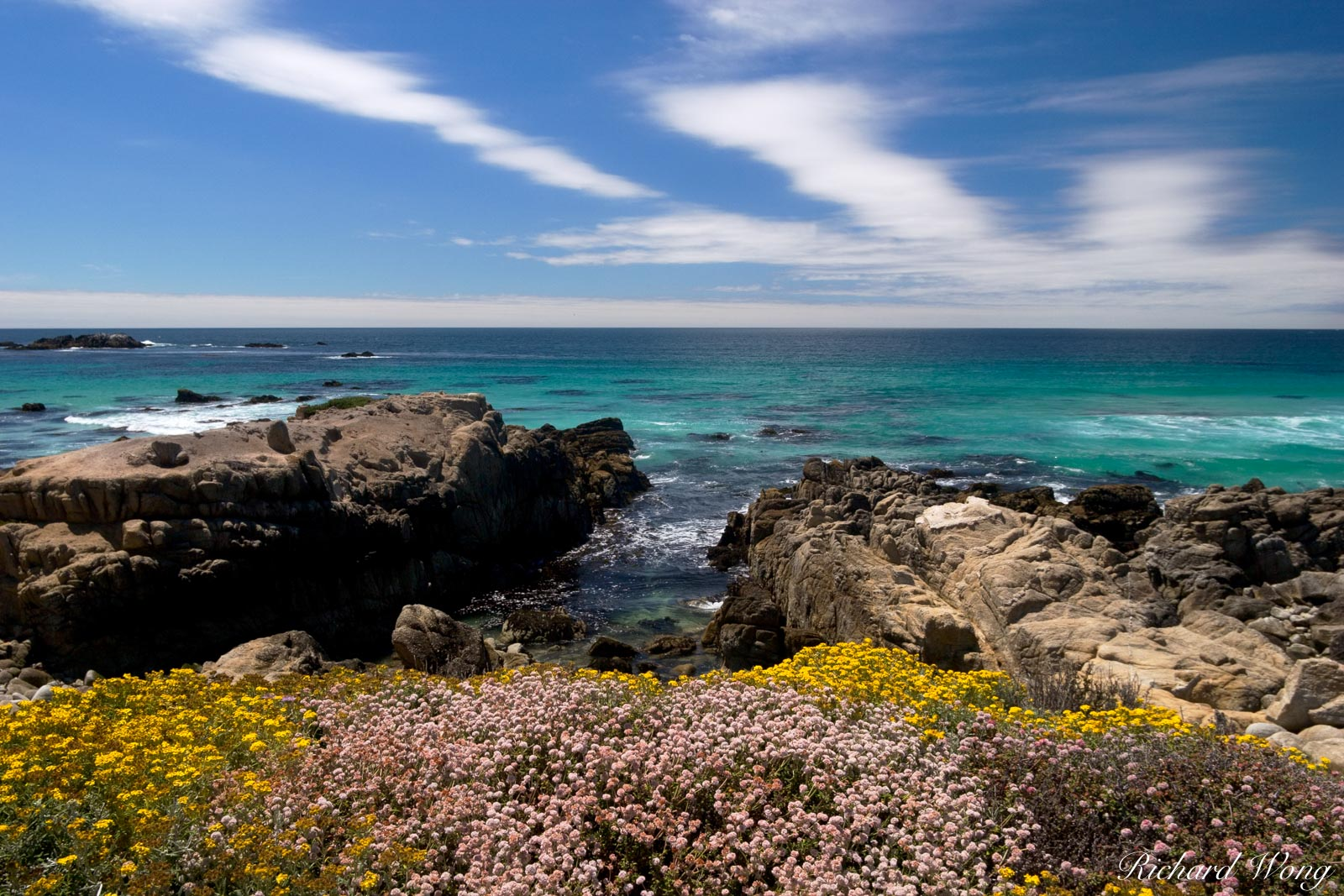 17 Mile Drive Coastal Wildflowers, Pebble Beach, California, photo, photo