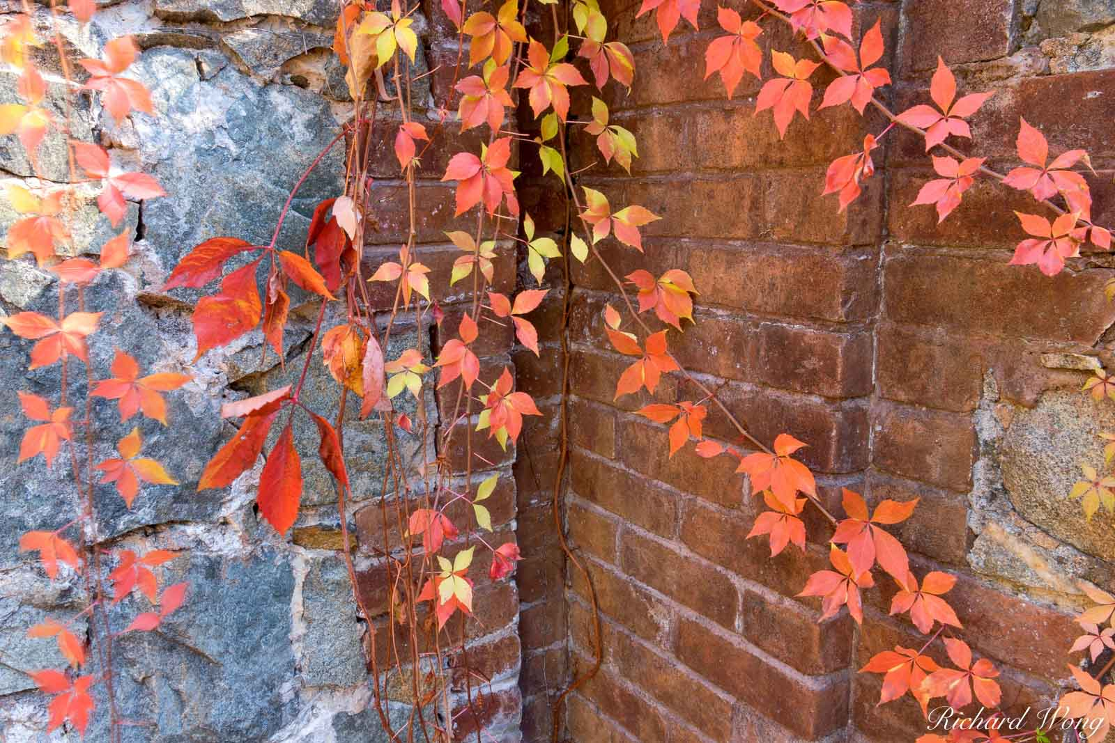Red Autumn Leaves Against Brick Wall, Empire Mine State Historic Park, Grass Valley, California, photo, photo