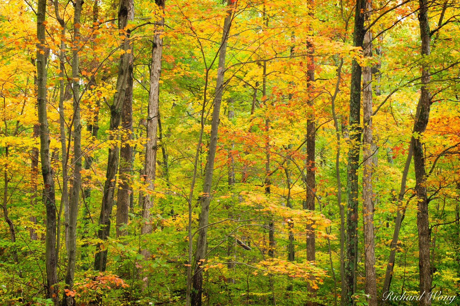 Bernheim Forest Fall Colors, Bullitt County, Kentucky, photo, photo