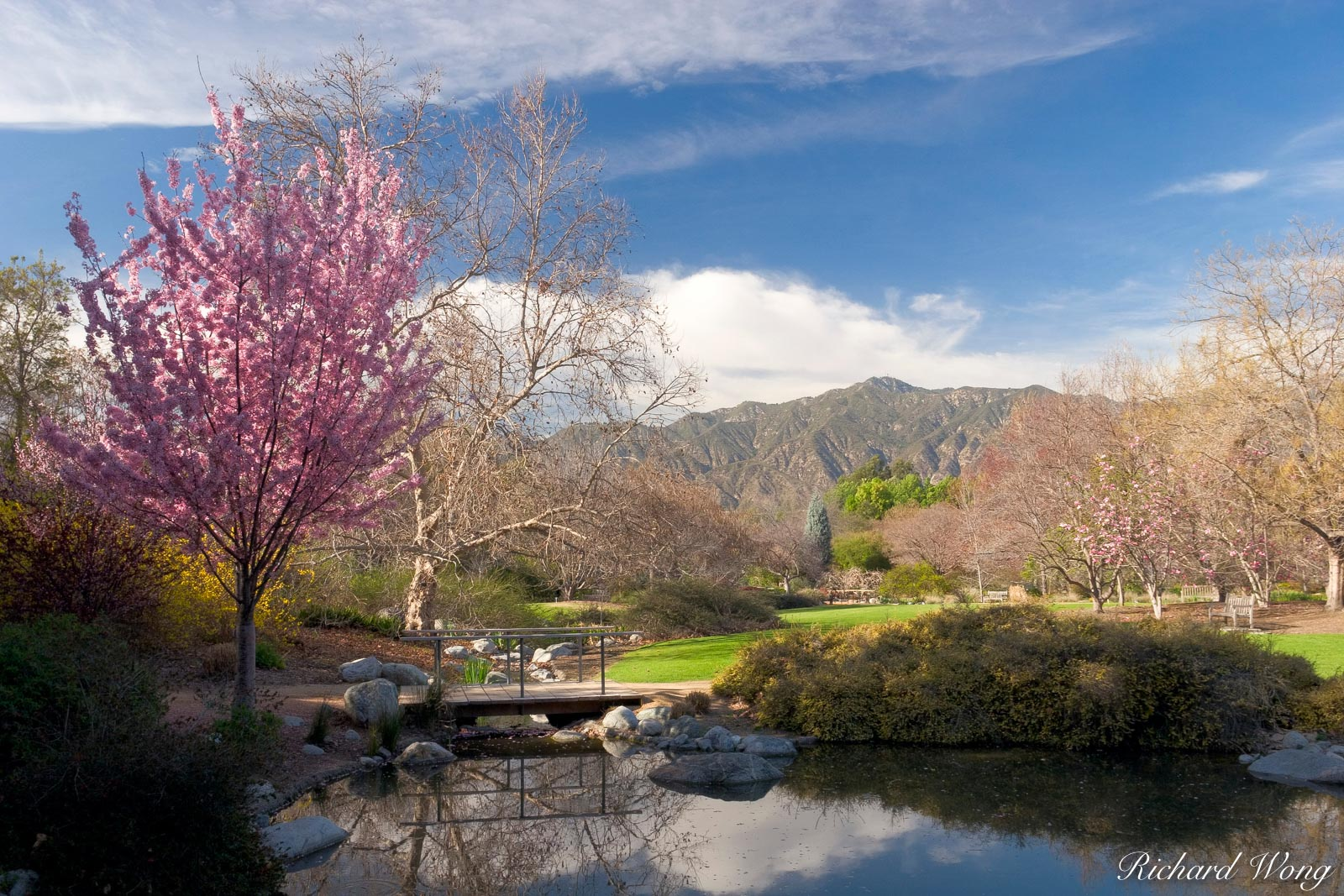 Los Angeles County Arboretum, Arcadia, California, photo, photo