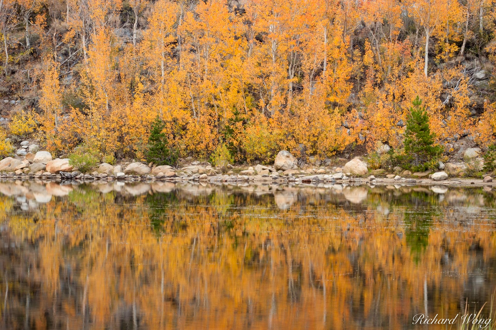 North Lake Fall Color Reflections, Inyo National Forest, California, photo, photo