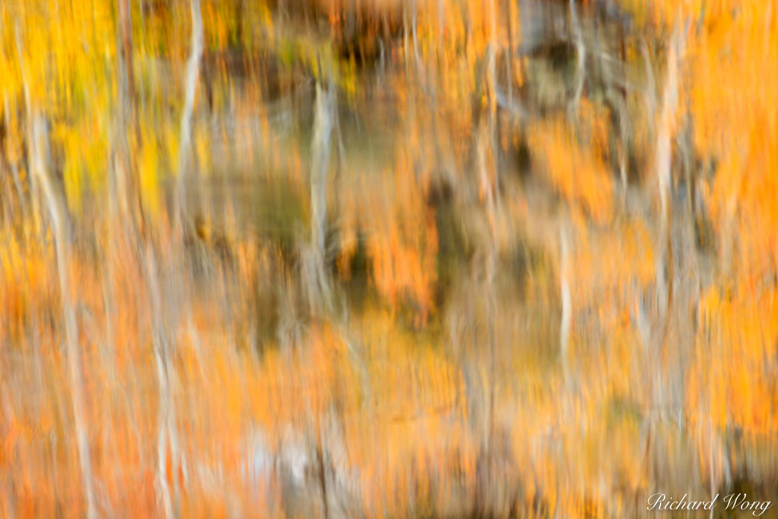 peter lik one style photo, north lake fall color water reflection abstract, eastern sierra, california, photo, photo
