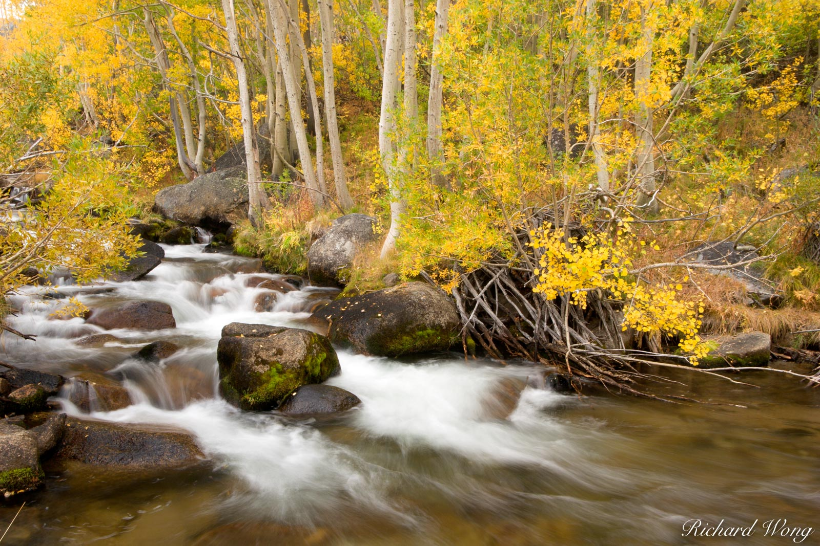 South Fork Bishop Creek and Aspen Trees in Fall, Inyo National Forest, California, photo, photo