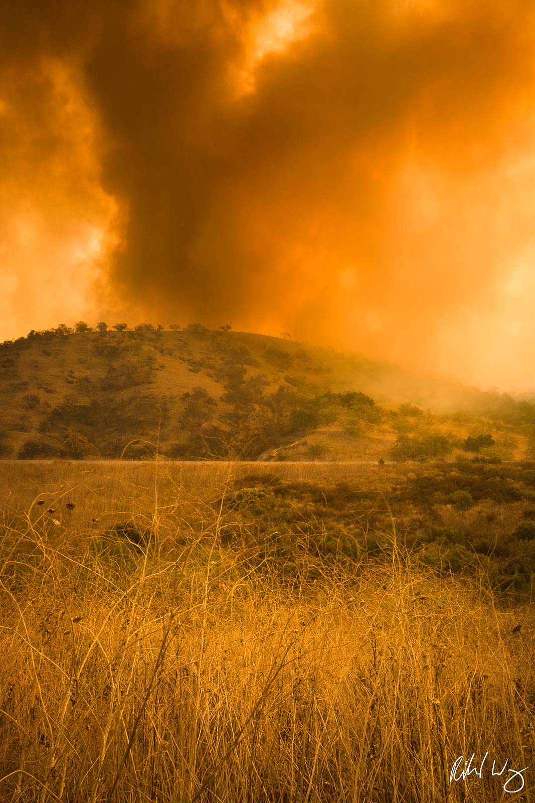 Dry Brush in Brea Canyon Firestorm, Southern California, photo, photo