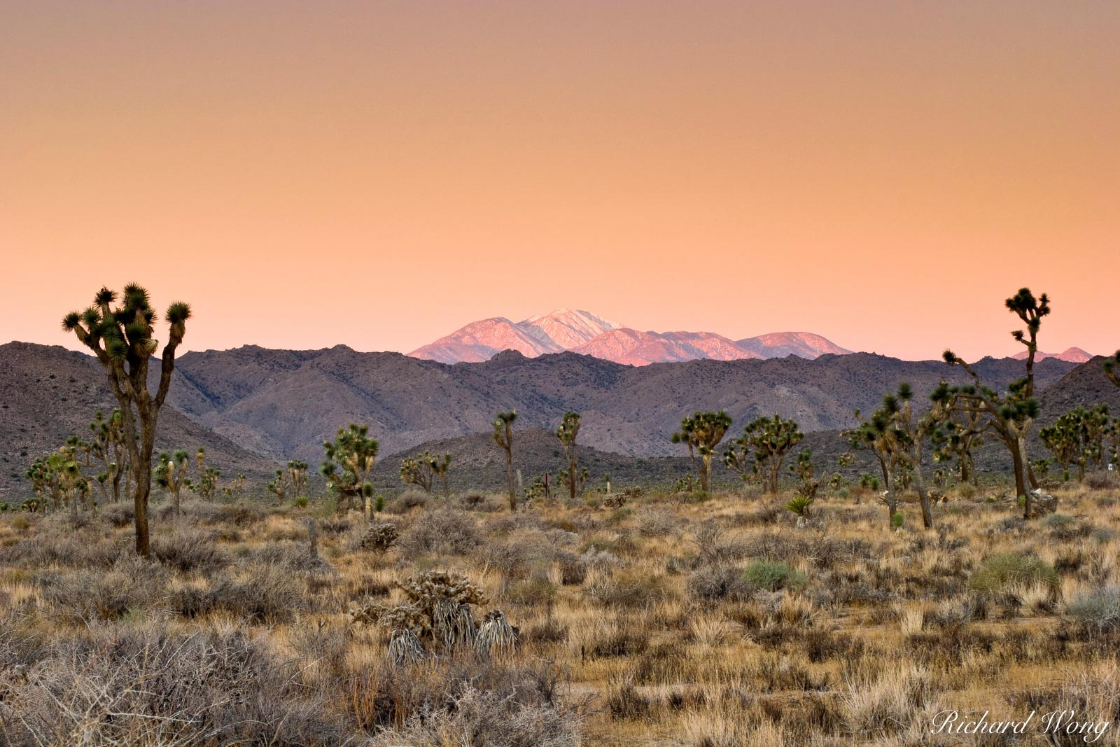Winter Sunrise View of Mount San Gorgonio, Joshua Tree National Park, California, photo, photo