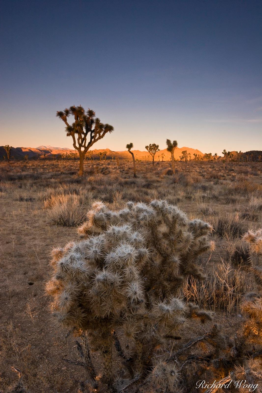 Joshua Tree National Park Sunrise, California, photo, photo