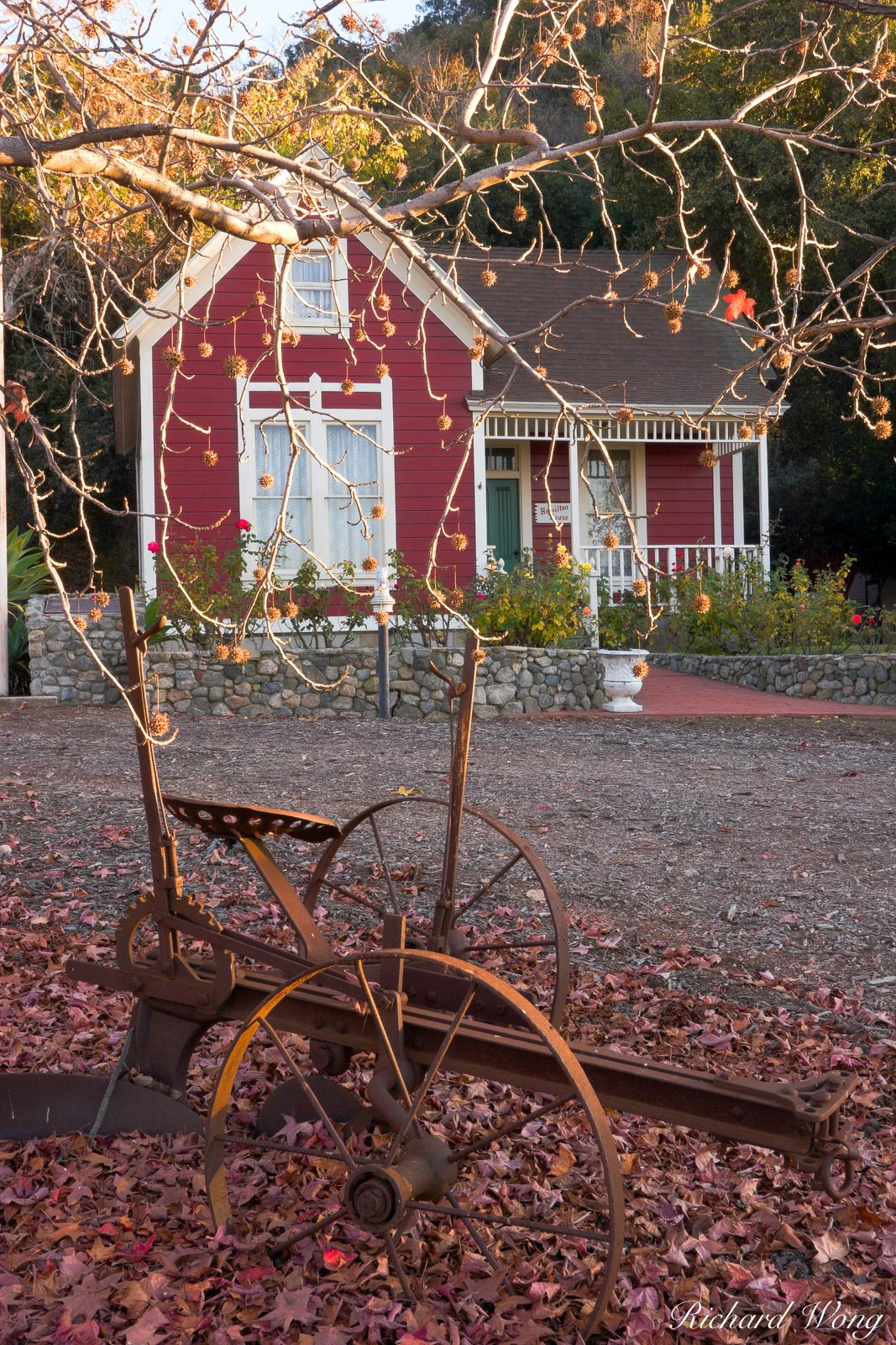 Hamilton House, Antique Farming Equipment and Liquid Amber Tree in Fall Season / Centennial Heritage Park, Glendora, California, photo, photo