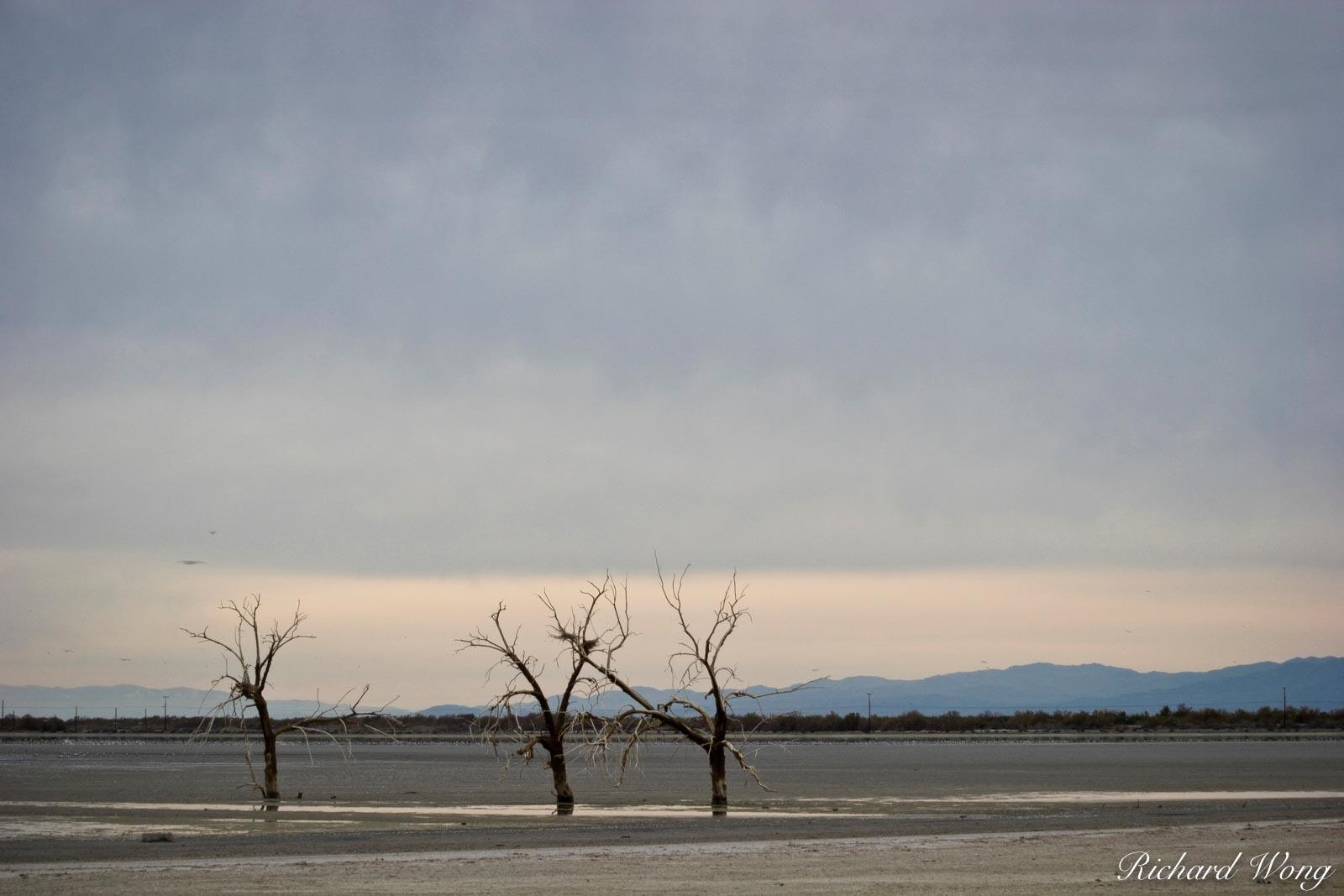 Dead Oak Trees, Sonny Bono Salton Sea National Wildlife Refuge, California, photo, photo