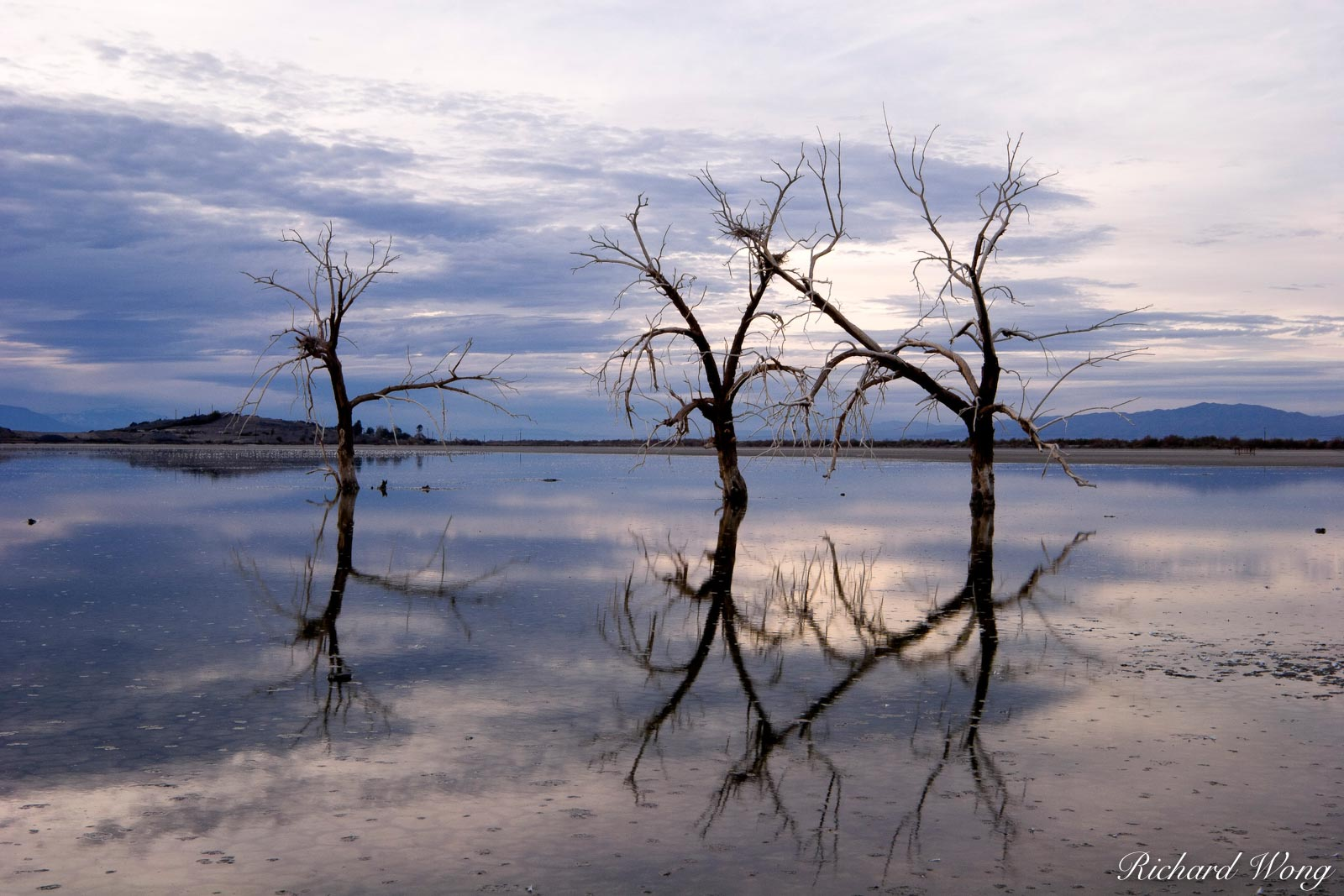 Dead Oak Trees, Sonny Bono Salton Sea National Wildlife Refuge, California, photo, photo