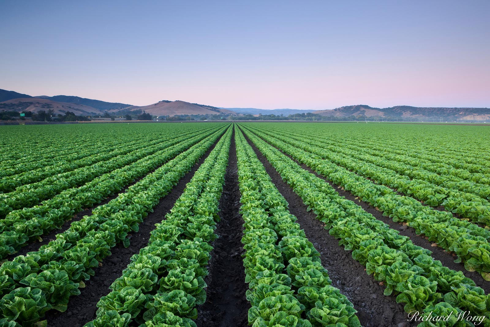 Agriculture Field of Lettuce Crops, Salinas, California, photo, photo