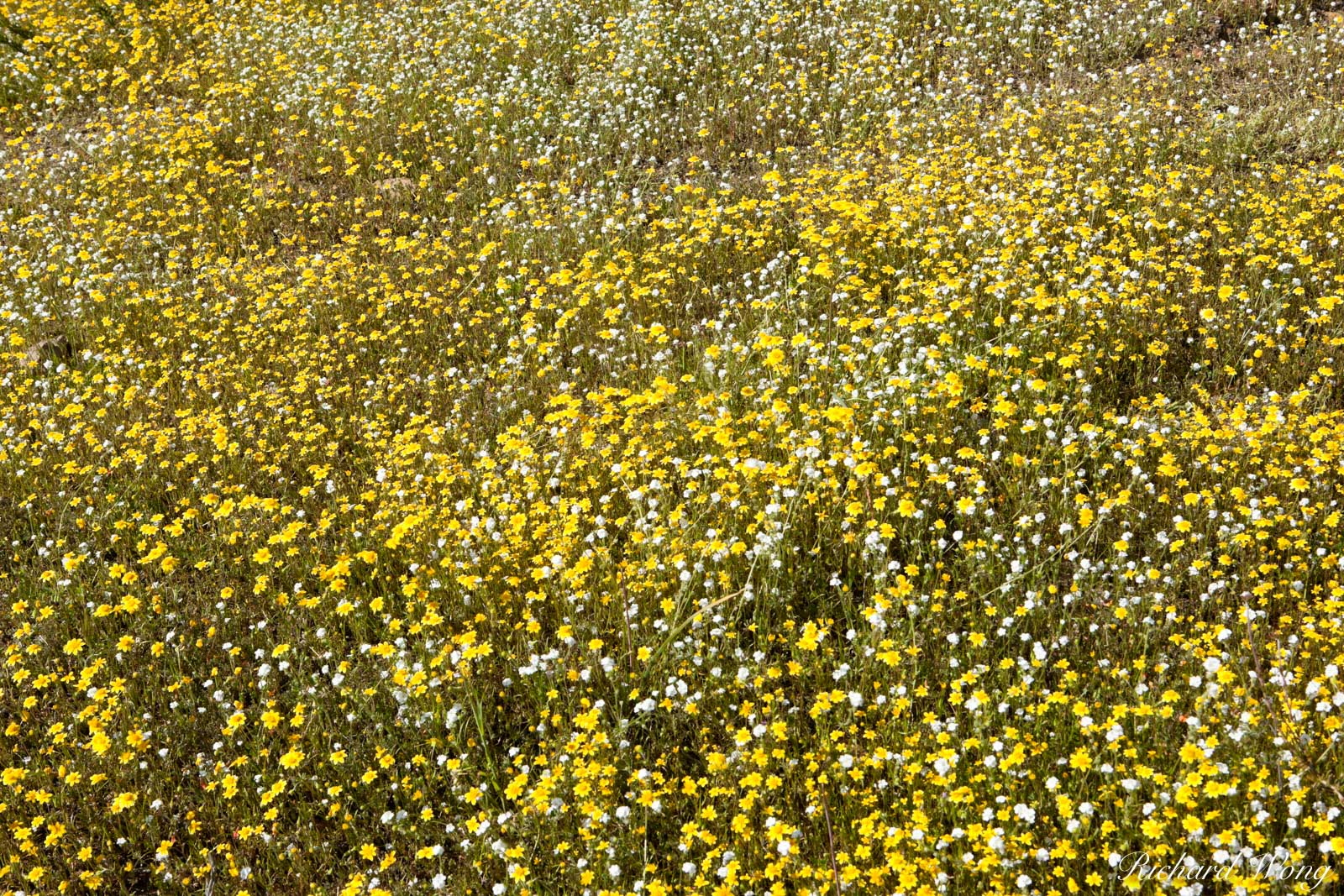 Spring Wildflowers in the Hills of Lake Elsinore, California, photo, photo