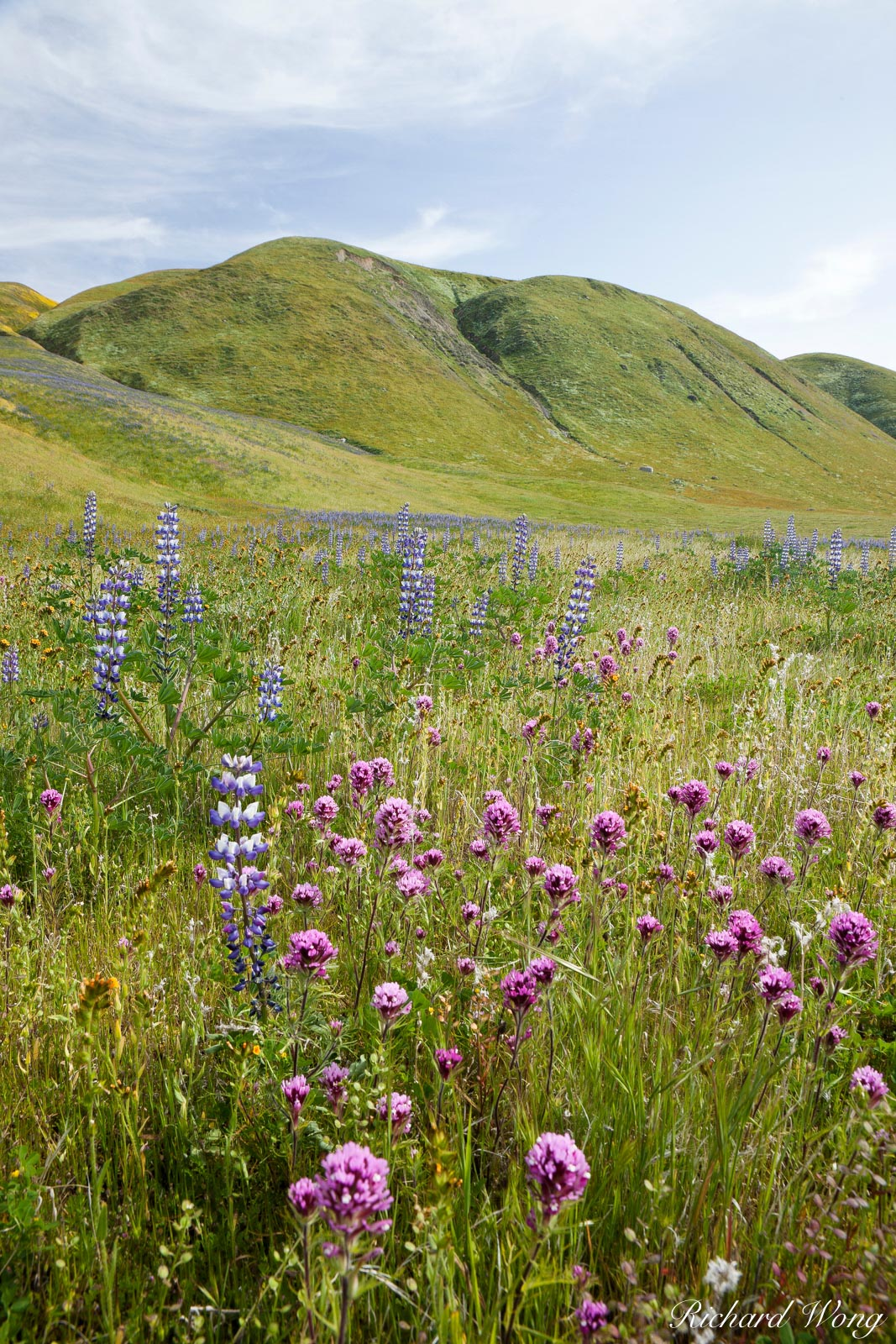 Wildflowers, Wind Wolves Preserve, California, photo, photo