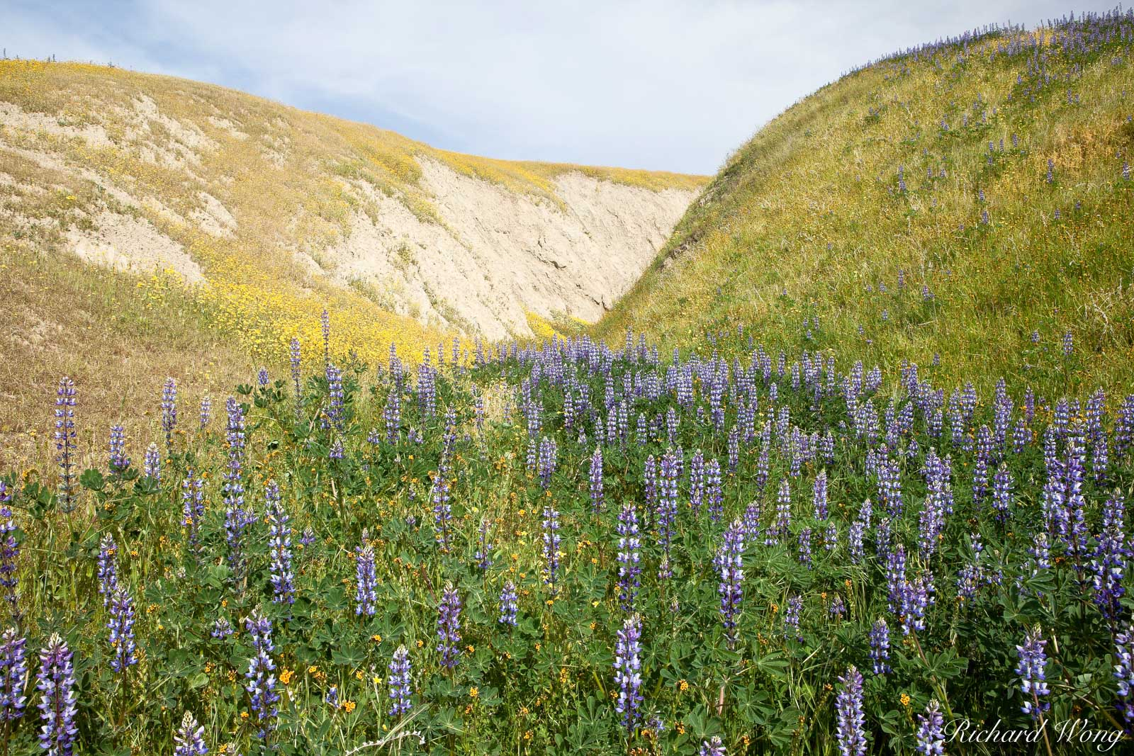 Lupine, Wind Wolves Preserve, California, photo, photo