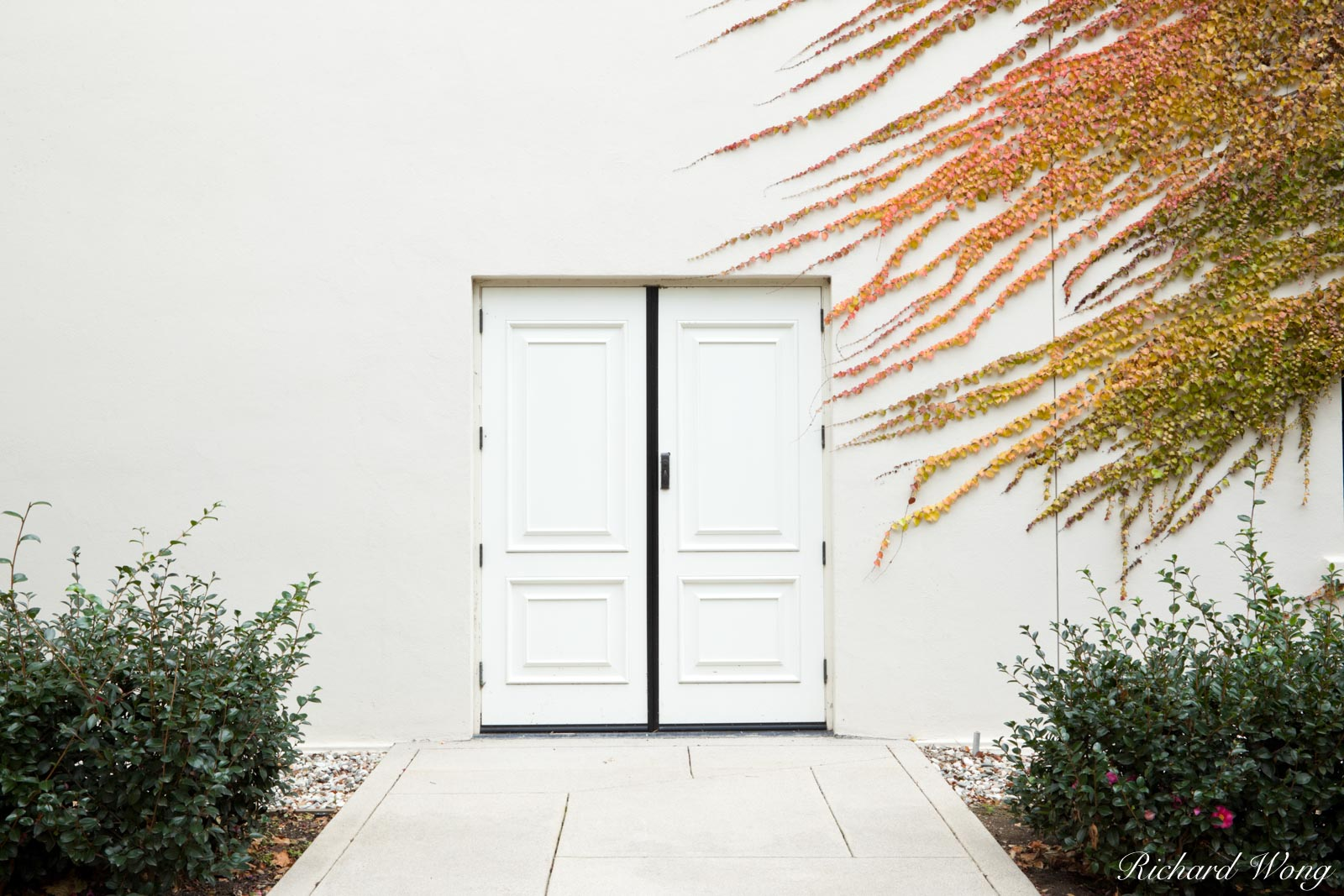 Double White Doors with Fall Foliage Ivy at Virginia Steele Scott Galleries of American Art / The Huntington Library and Botanical Gardens, San Marino, California, photo, photo