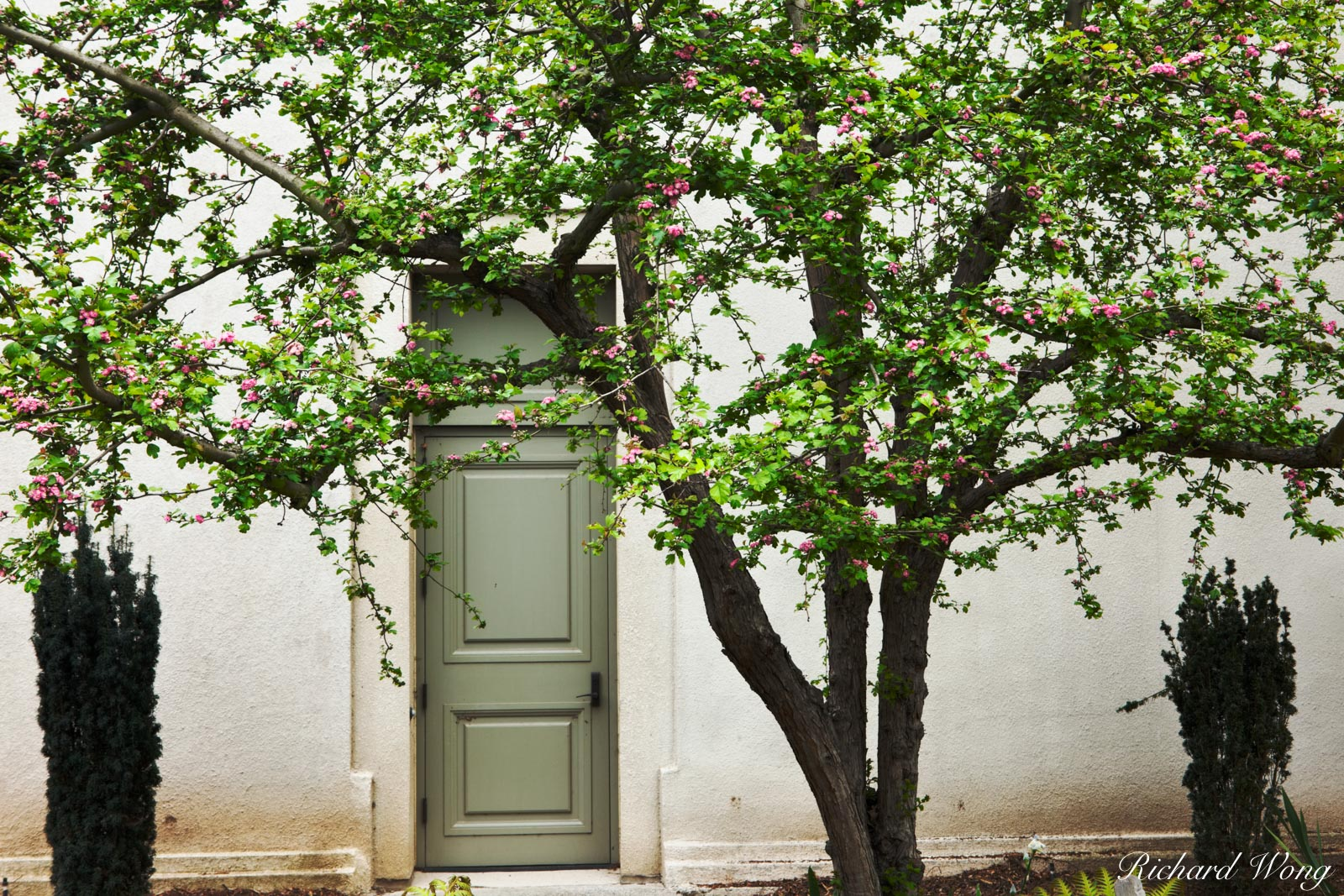 Spring Tree Flower Blossoms and Green Door to The Huntington Art Gallery, San Marino, California The Shakespeare Garden at the...