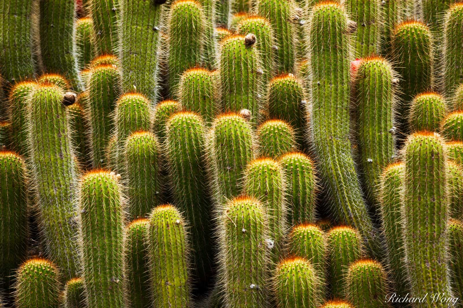 Cactus at The Desert Garden in Huntington Botanical Gardens, San Marino, California, photo, photo