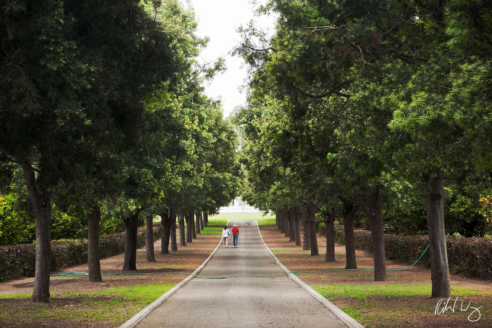 Couple Walking Down Tree-Lined Road Toward Mausoleum at The Huntington, San Marino, California