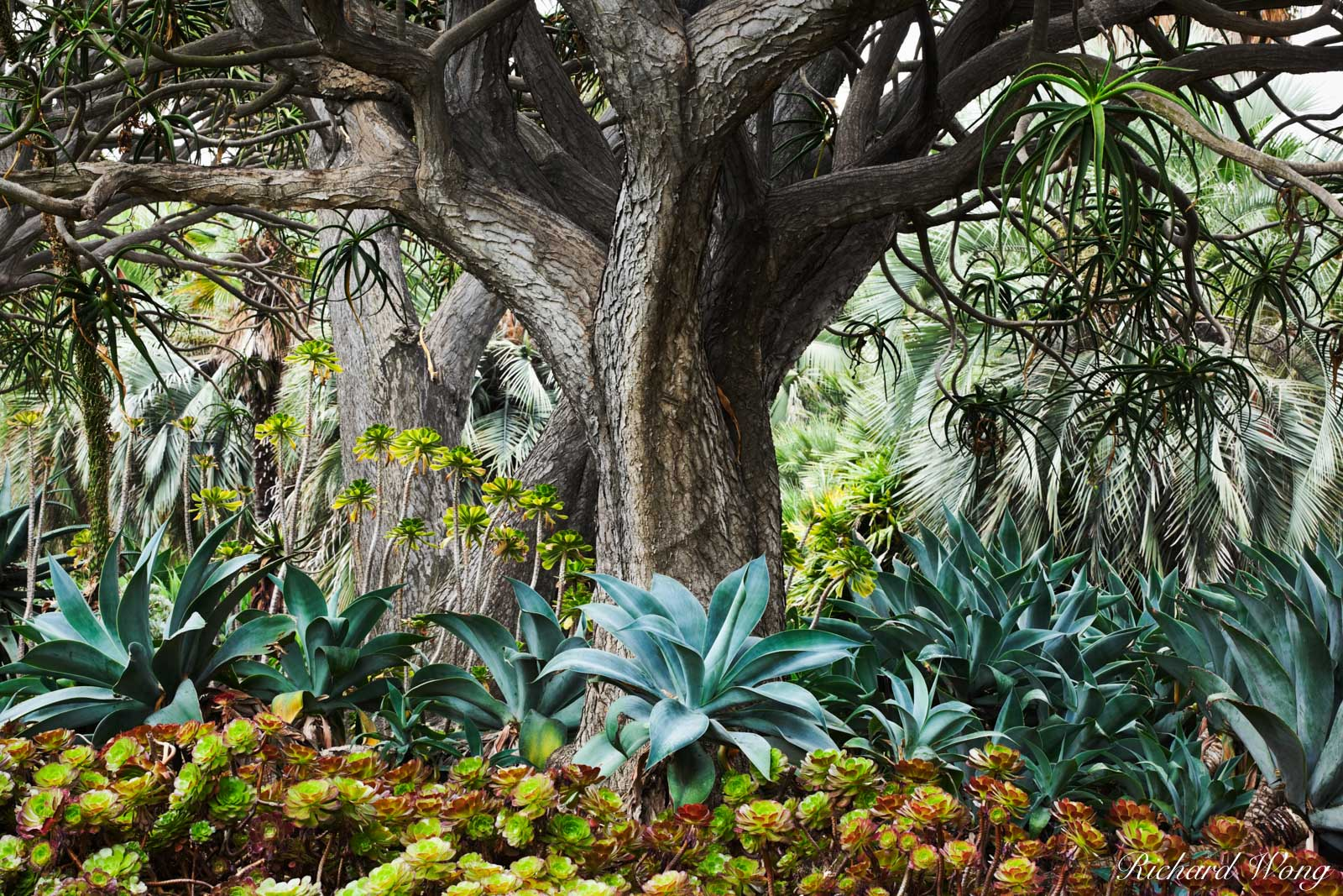 Palm Garden Scene at The Huntington, San Marino, California, photo, photo