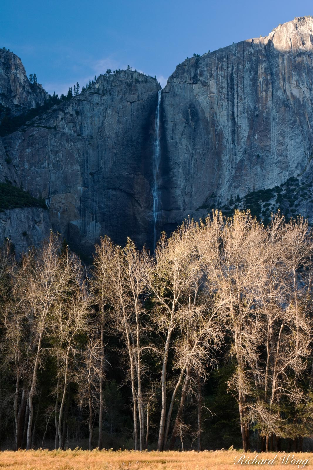 Illuminated Cottonwood Trees with Yosemite Falls in Shadow at Cook's Meadow, Yosemite National Park, California, photo, photo