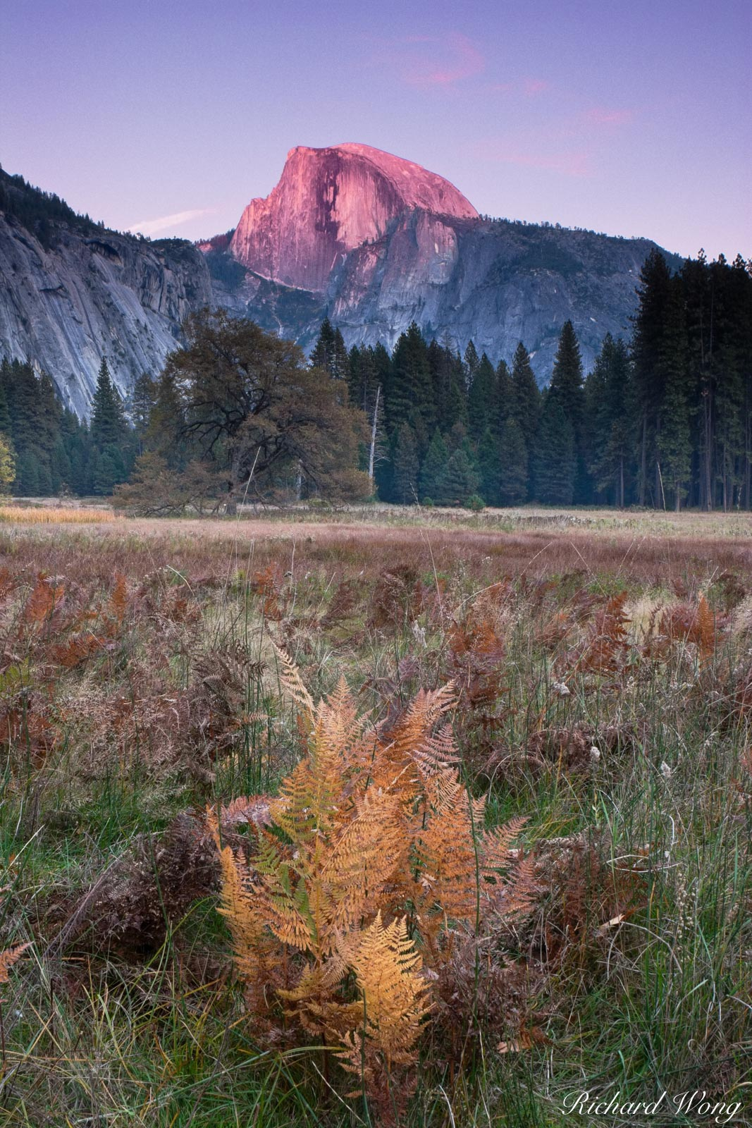 Sunset Alpenglow on Half Dome from Cook's Meadow During Fall Season, Yosemite National Park, California, photo, photo