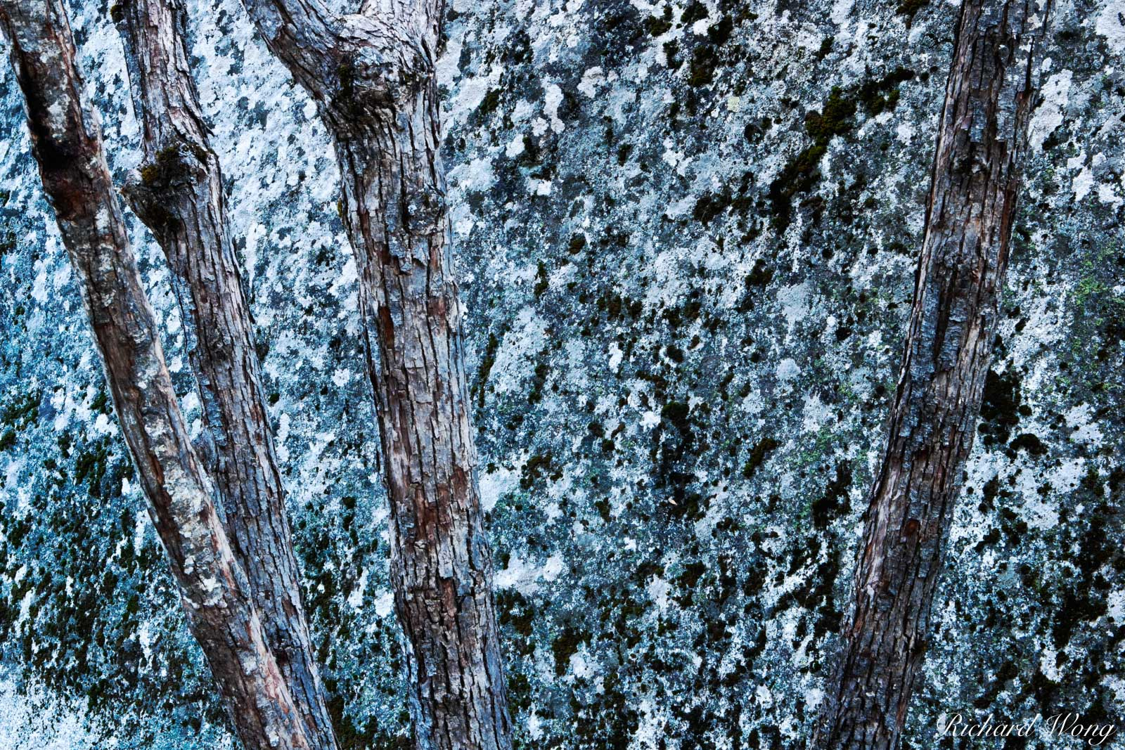 Granite and Tree, Yosemite National Park, California, photo, photo