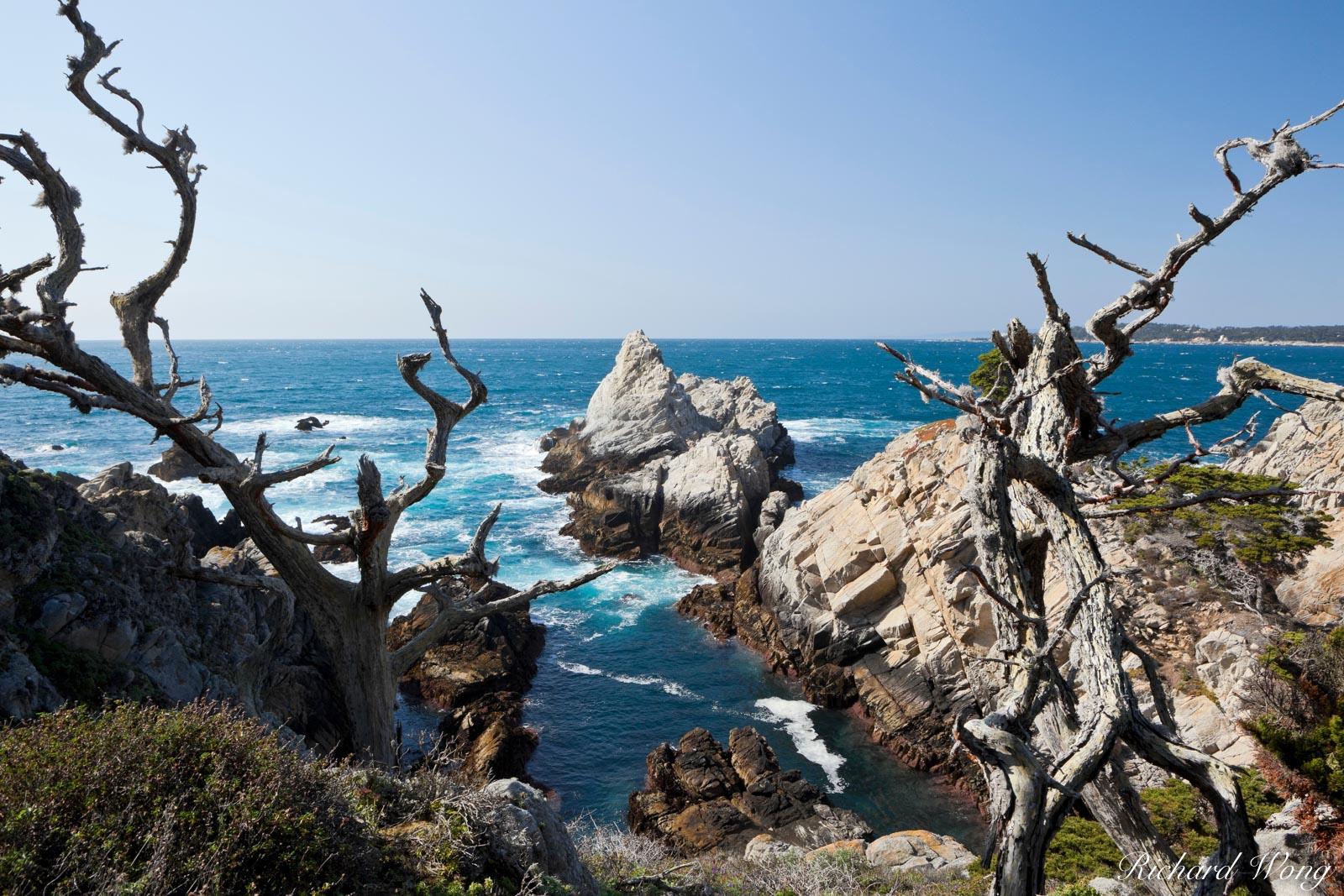 Monterey Cypress Trees Framing Scenic Vista Along Allan Memorial Grove Trail, Point Lobos State Reserve, California, photo