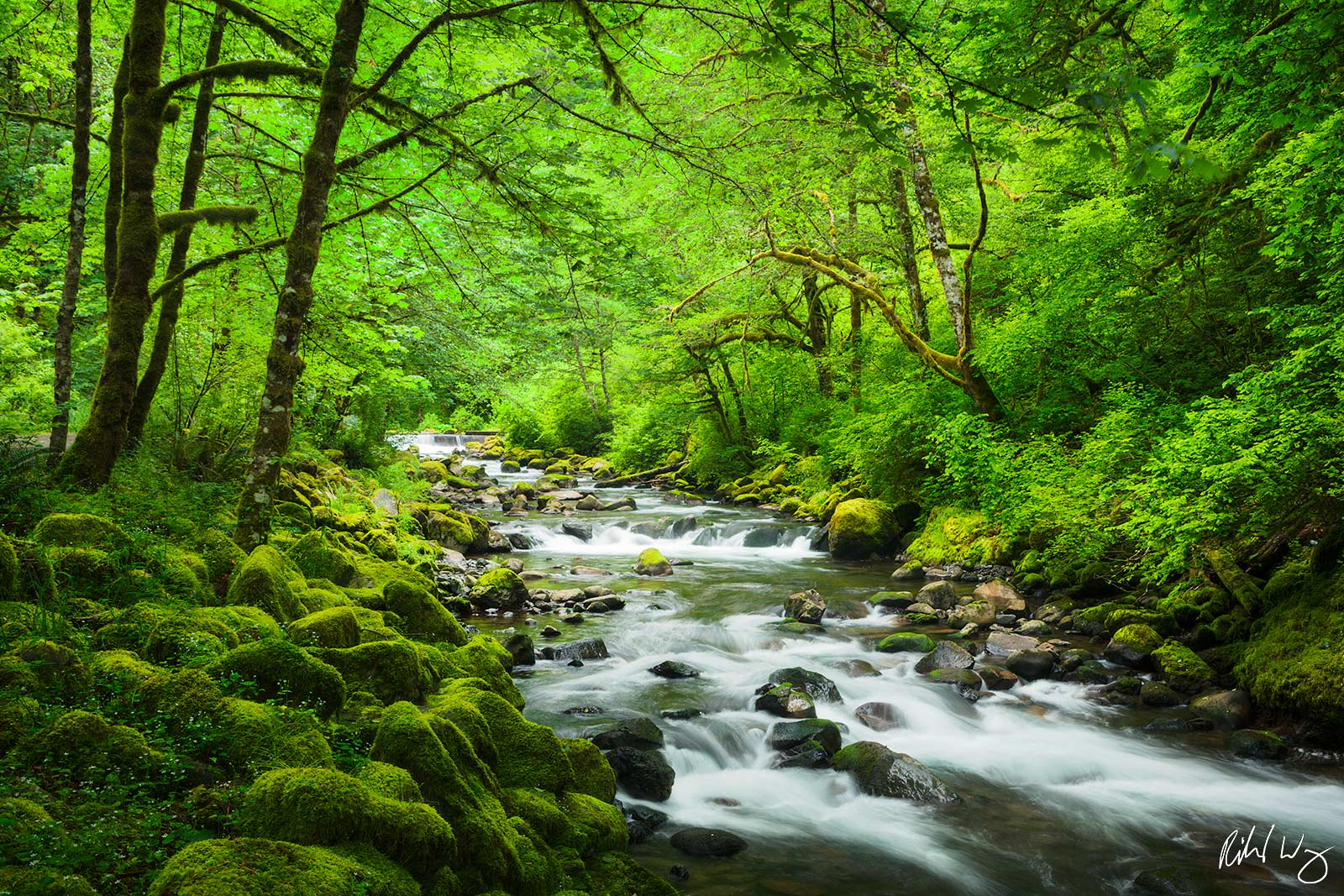 Tanner Creek, Columbia River Gorge National Scenic Area, Oregon, photo, photo
