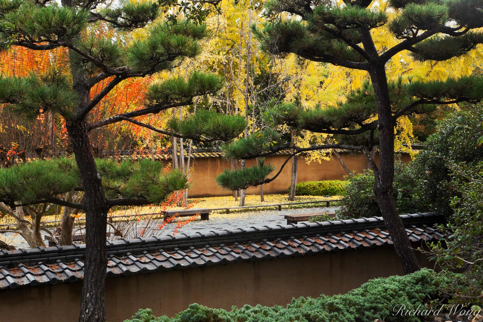 Fall Color in Japanese Garden at The Huntington, San Marino, California, photo, photo