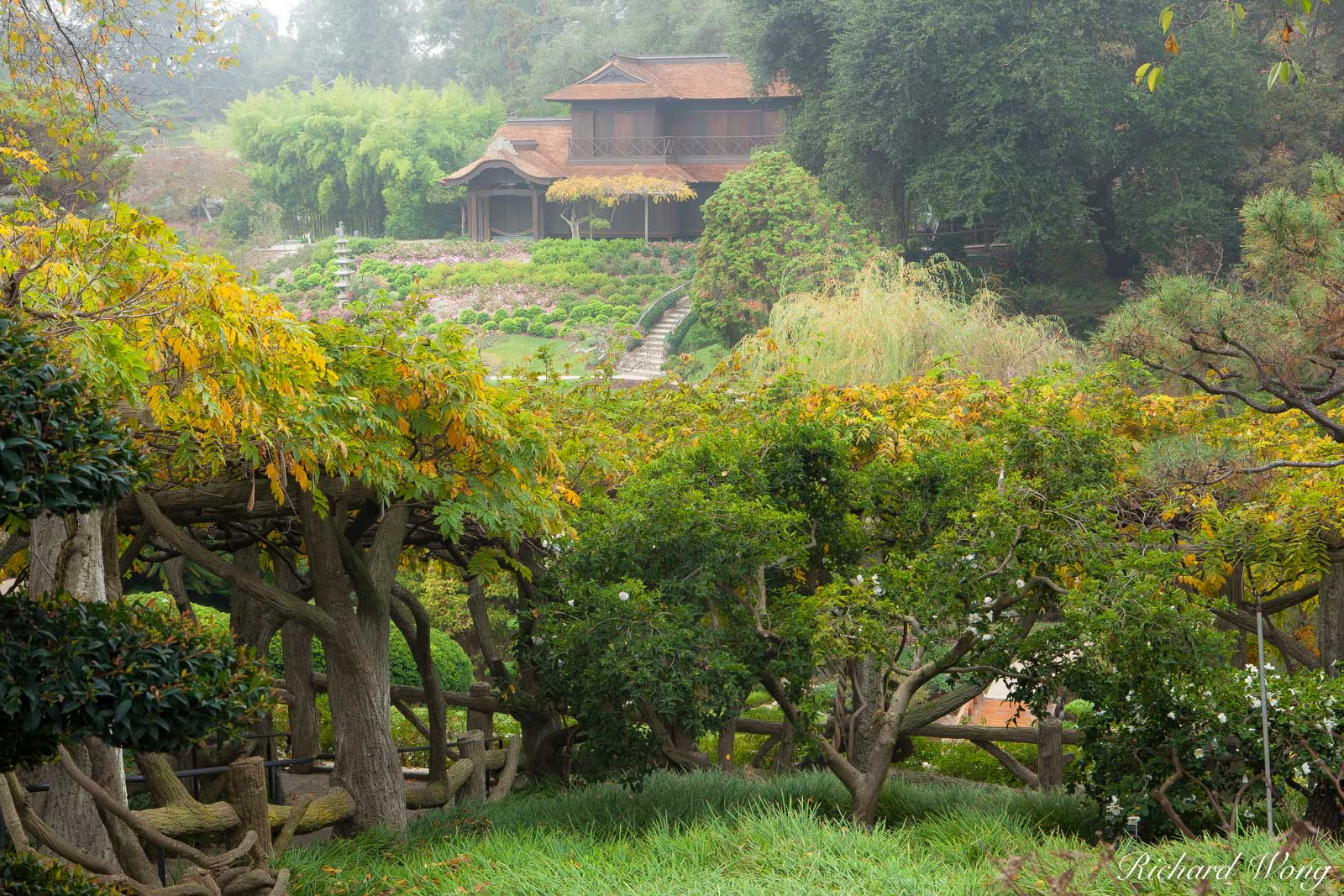Foggy Fall Morning in the Japanese Garden at The Huntington, San Marino, California, photo, photo