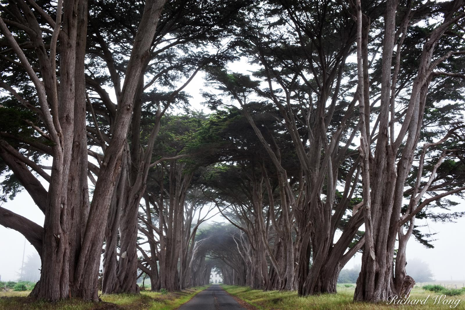 Monterey Cypress Tree Tunnel, Point Reyes National Seashore, California, photo, photo
