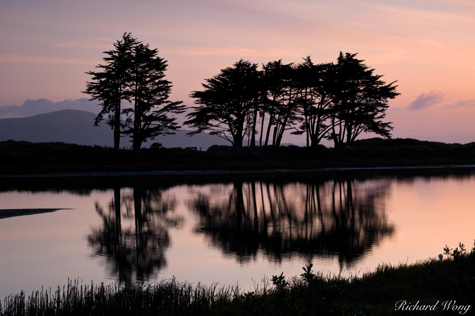 Monterey Cypress Trees Silhouetted in Pre-Dawn Light at Crissy Field Marsh, San Francisco, California, photo, photo