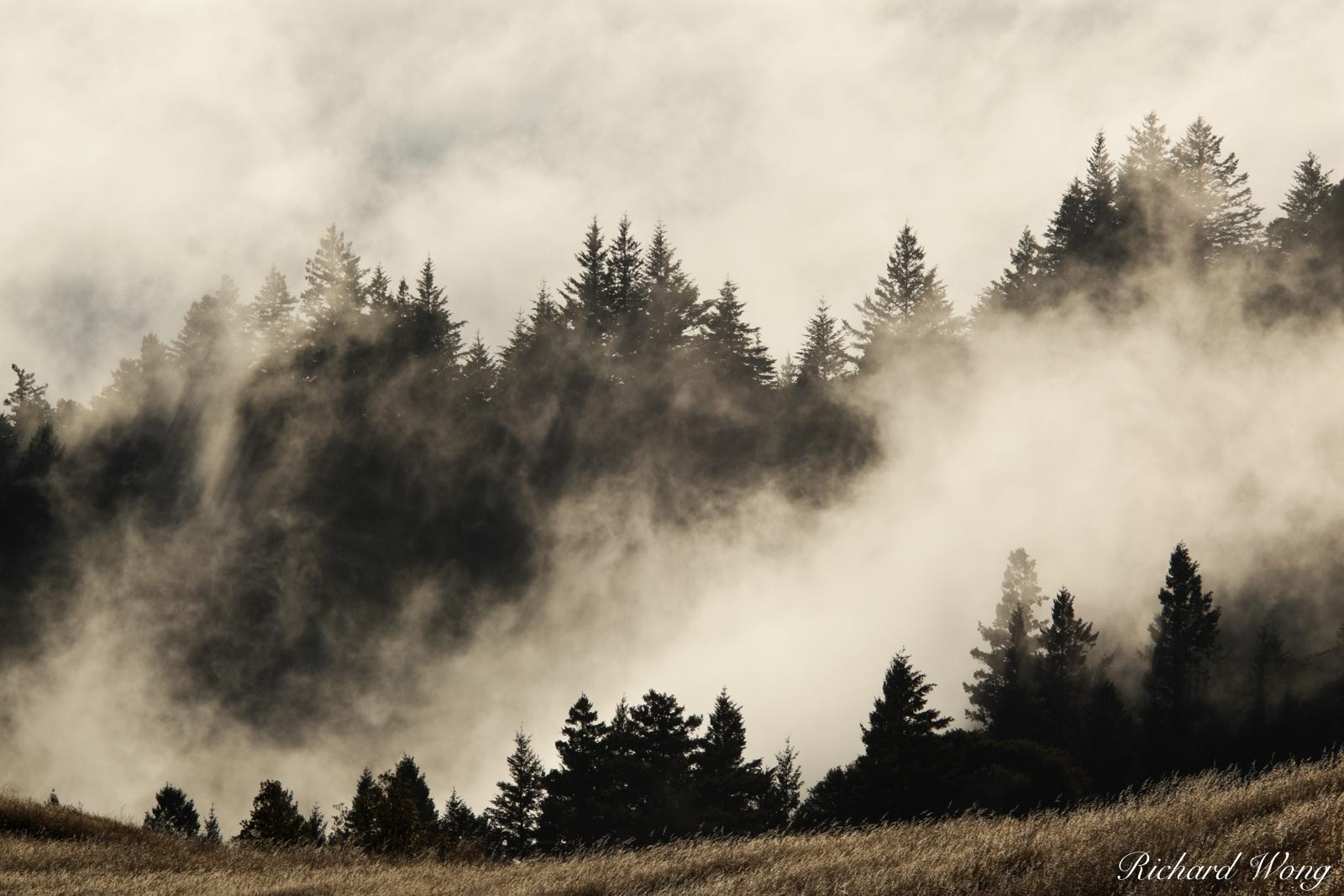 Summer Fog Rolling into Bolinas Ridge at Sunset, Mount Tamalpais State Park, California, photo, photo