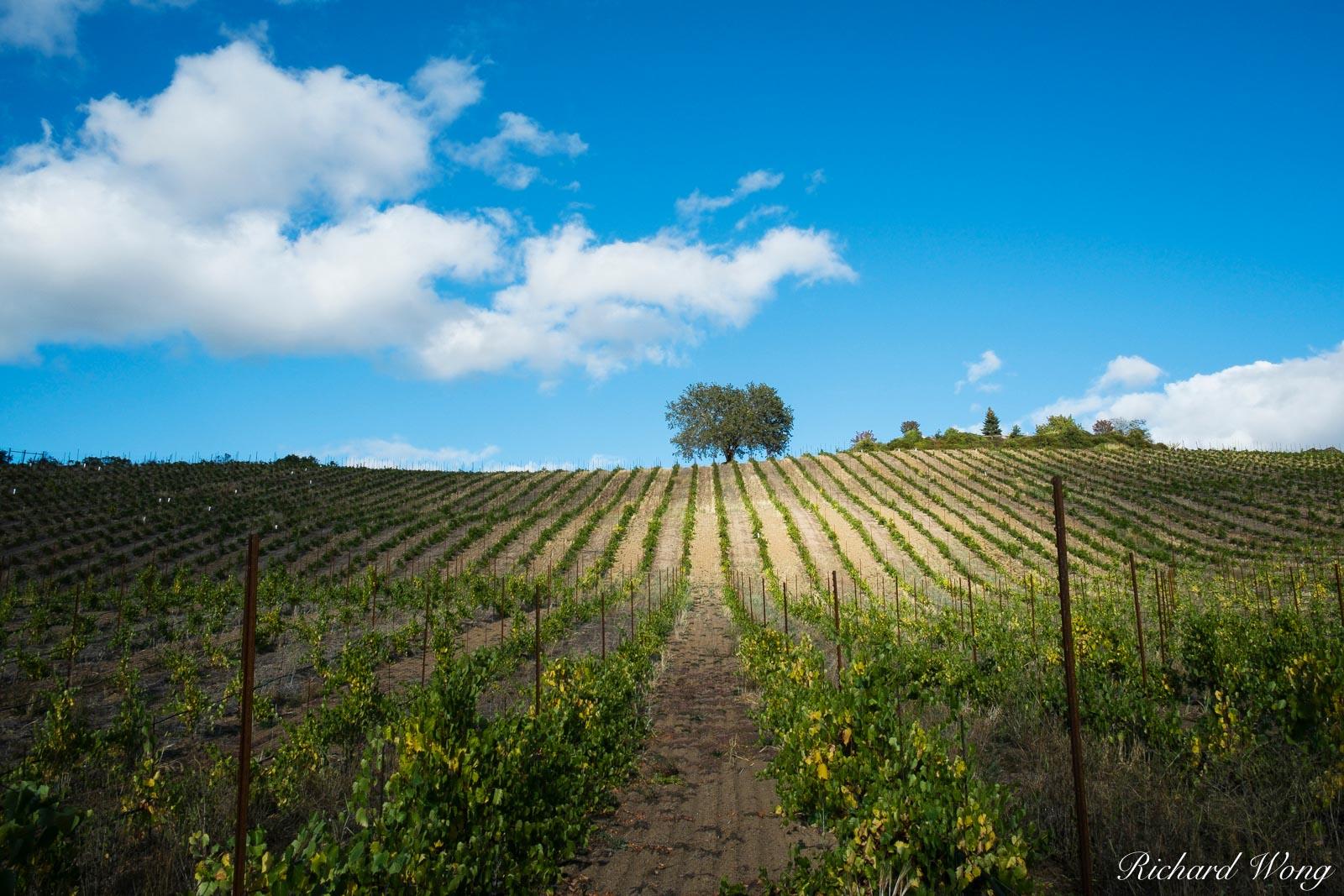 Joseph Family Vineyards, Healdsburg, California, photo