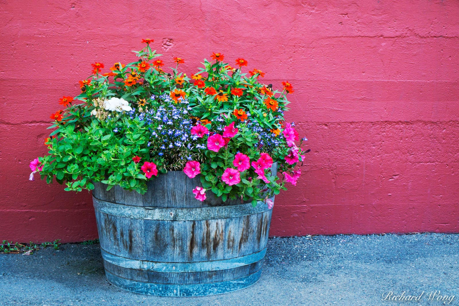 Korbel Winery Potted Flowers Against Red Wall, Guerneville, California, photo, photo