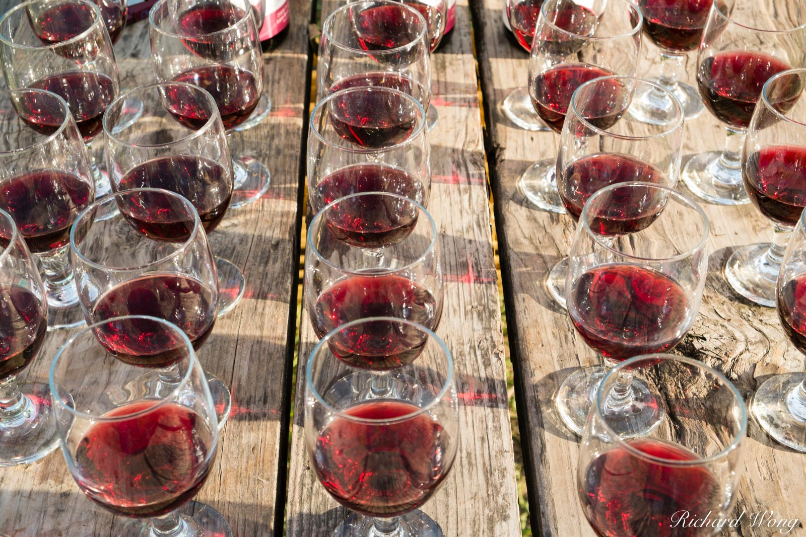 Pinot Noir Wine Tasting for Backroads Guests at Olema Campground, California, photo