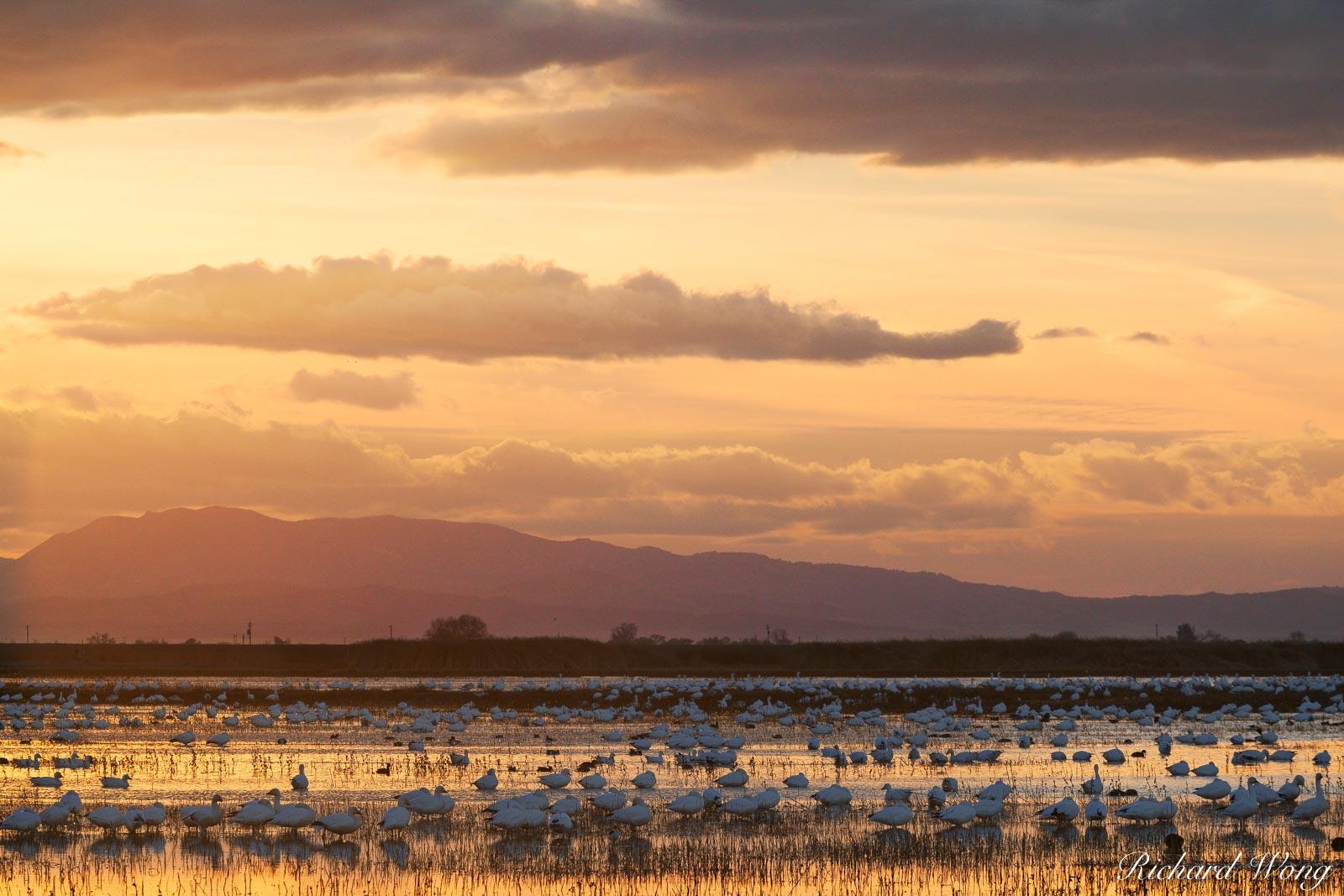 Winter Sunset, Merced National Wildlife Refuge, California, photo, photo