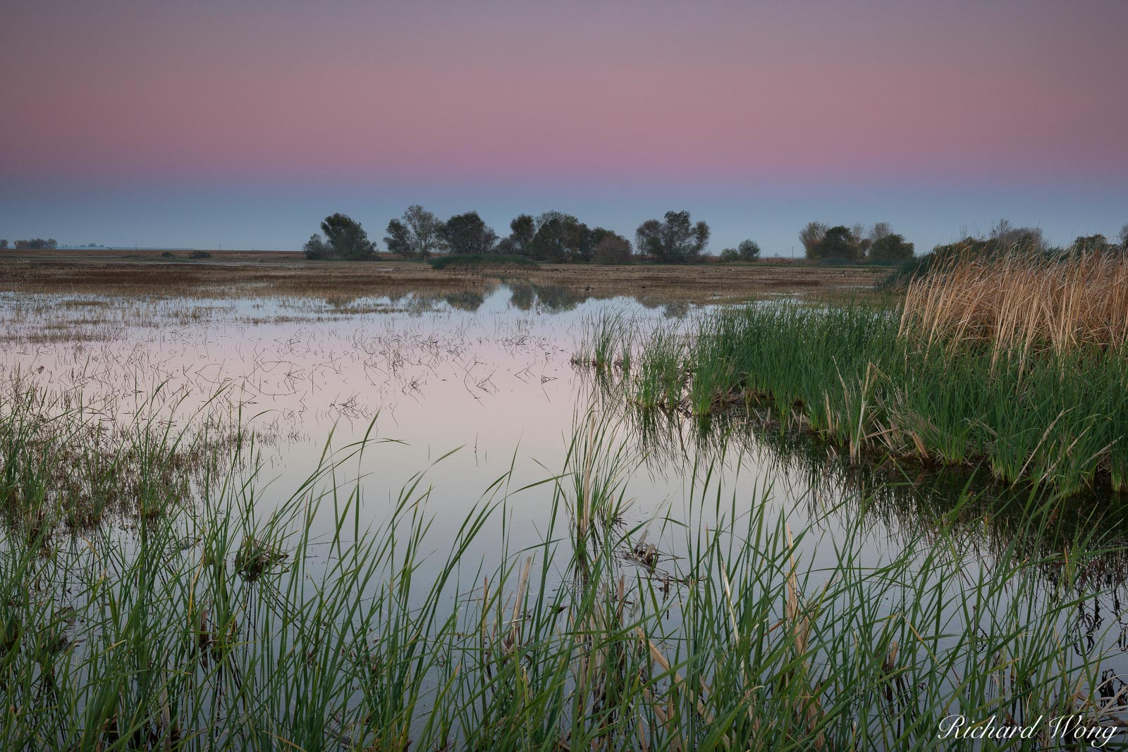Marsh at Dusk, Merced National Wildlife Refuge, California, photo, photo