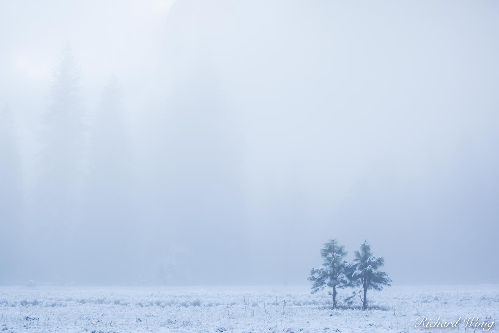 Pair of Young Trees in Cookís Meadow After Spring Snowstorm, Yosemite National Park, California, photo, photo