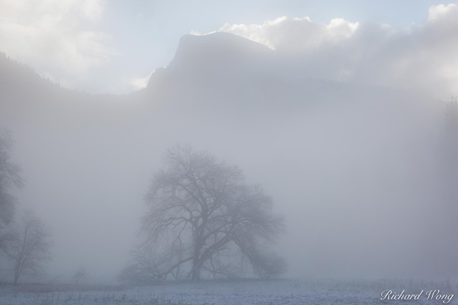Elm Tree and Half Dome in Fog After Spring Snowstorm, Yosemite National Park, California, photo, photo
