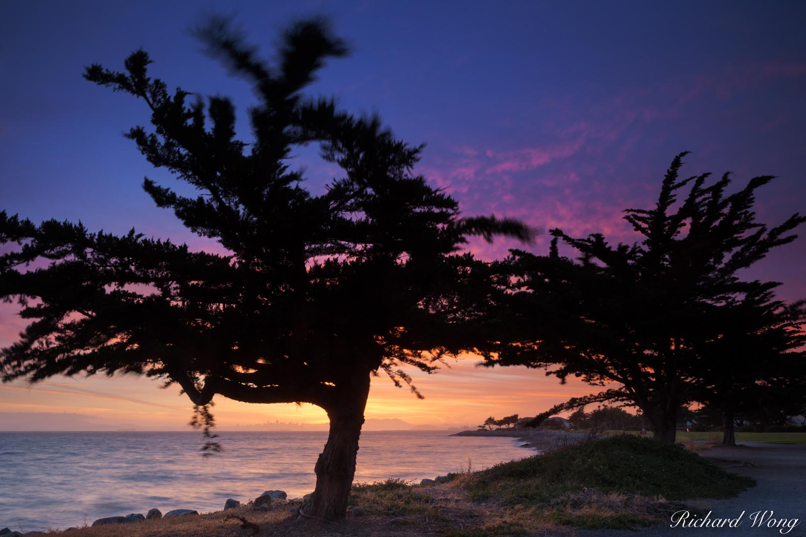 Wind-Gnarled Trees Along the Shoreline of San Francisco's East Bay, Alameda, California, photo, photo