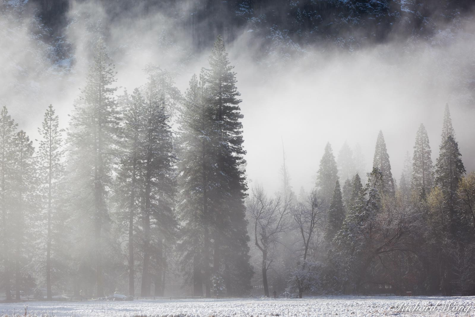 Foggy Spring Morning After Snowstorm in Cook's Meadow, Yosemite National Park, California, photo, photo