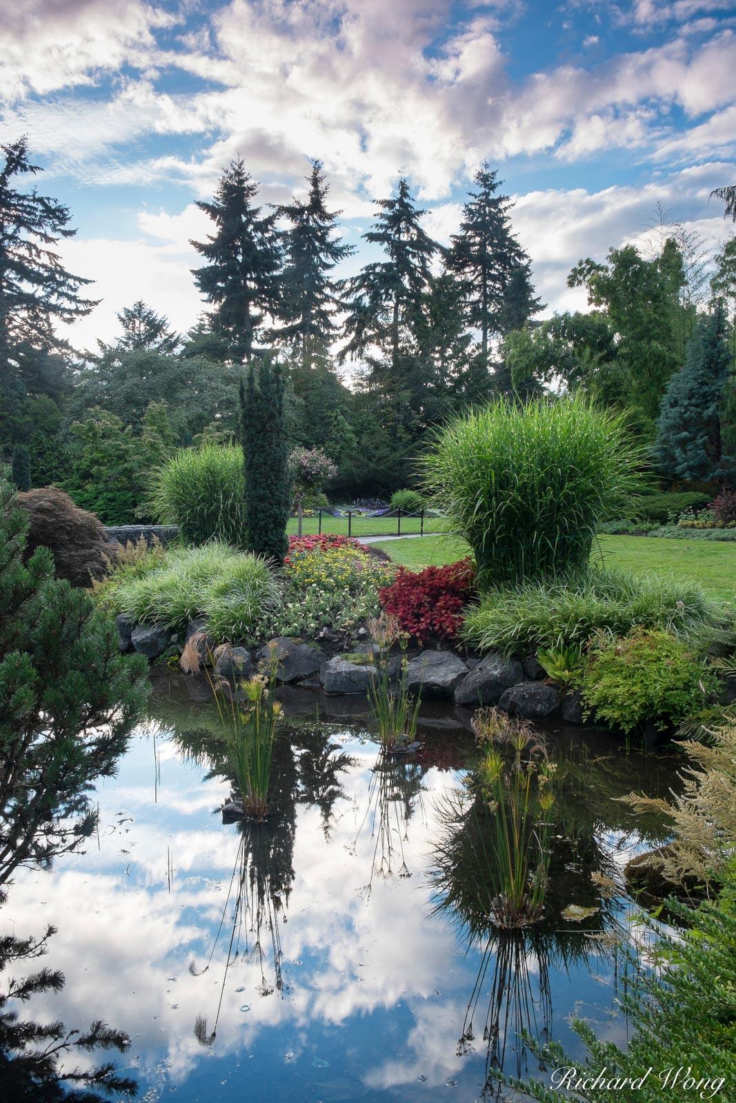 Pond Reflections in Sunken Garden at Queen Elizabeth Park, Vancouver, B.C., photo, photo