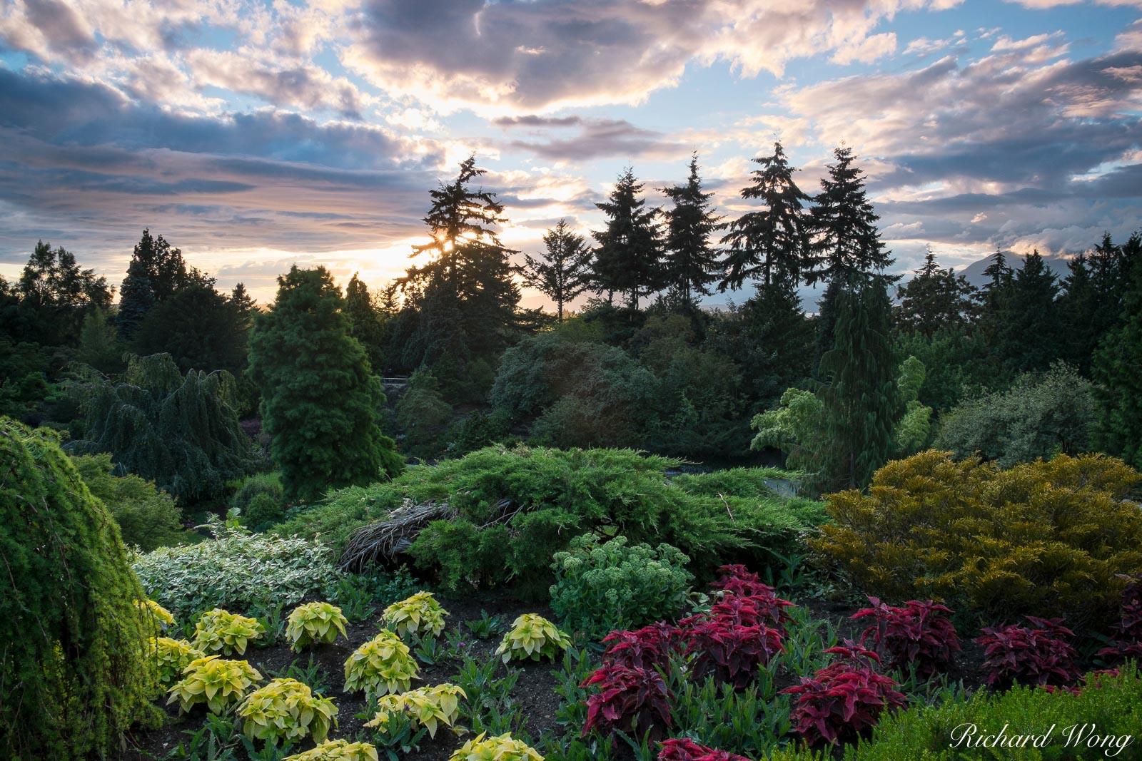 Queen Elizabeth Park at Sunset, Vancouver, B.C., photo, photo