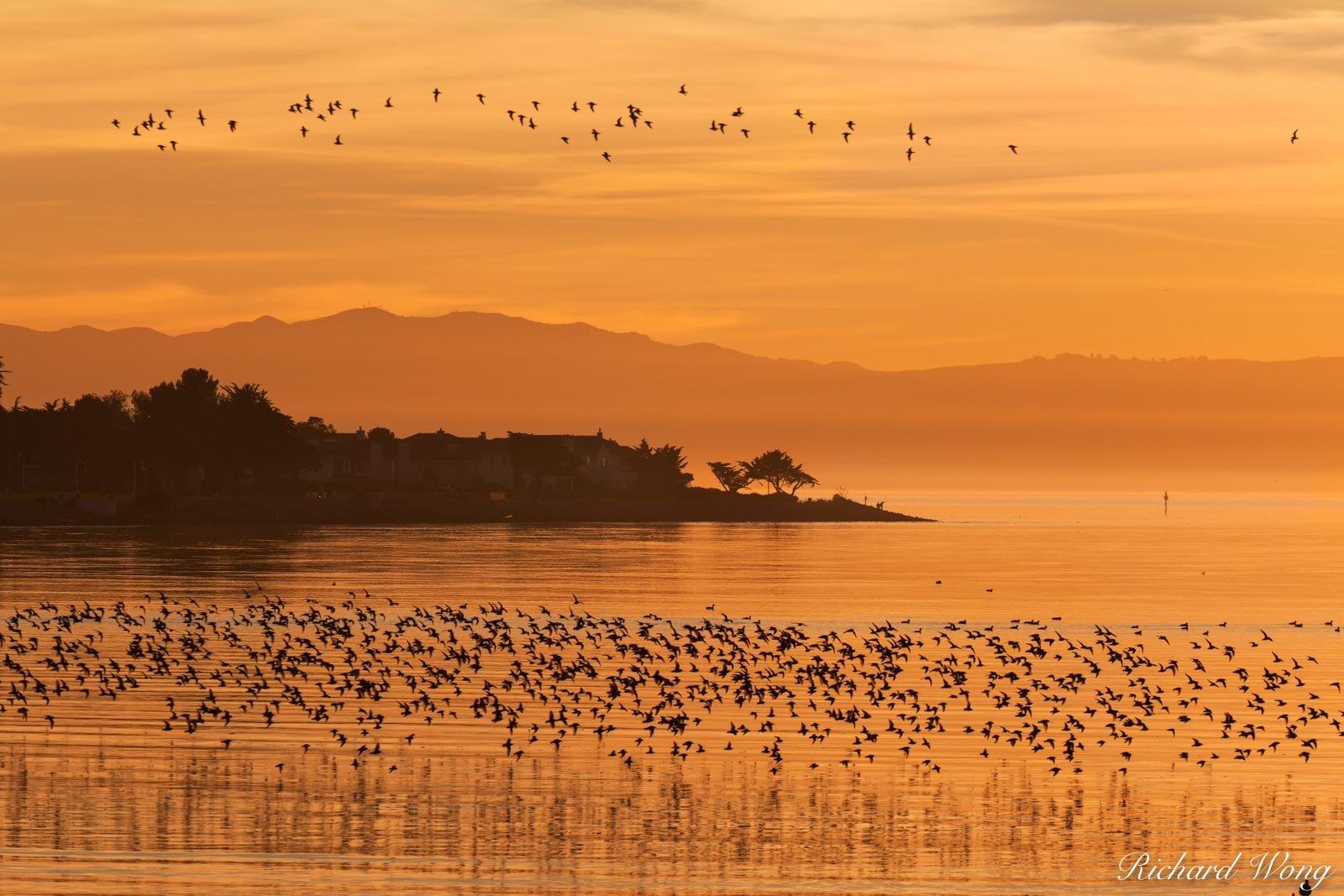 Elsie Roemer Bird Sanctuary at Sunset, Alameda, California, photo, photo