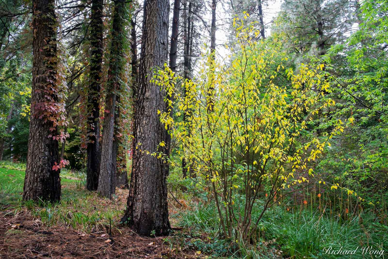 Empire Mine SHP Fall Color Forest Scene, Grass Valley, California, photo, photo
