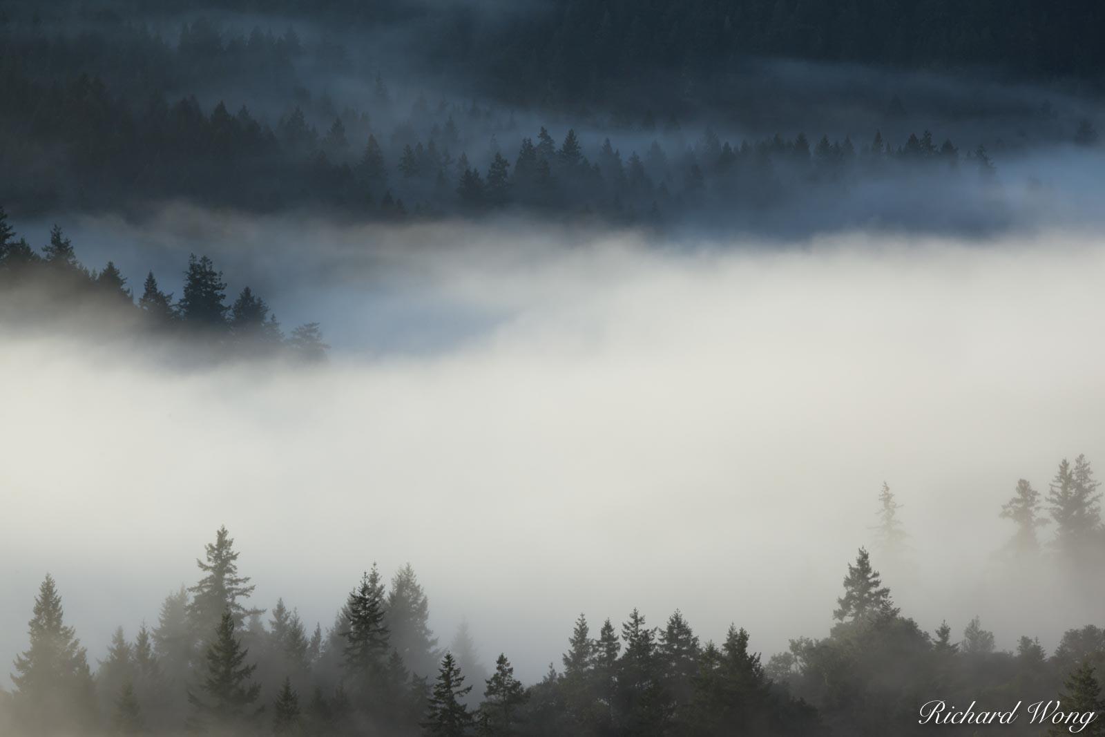Sunrise Fog Over Mt. Tamalpais Watershed, Marin County, California, photo, photo
