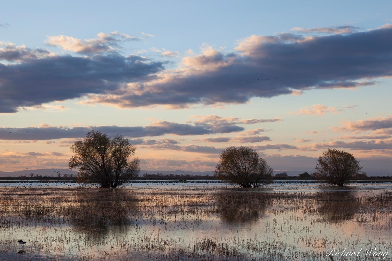 Winter Sunset, Merced National Wildlife Refuge, California, photo, photo